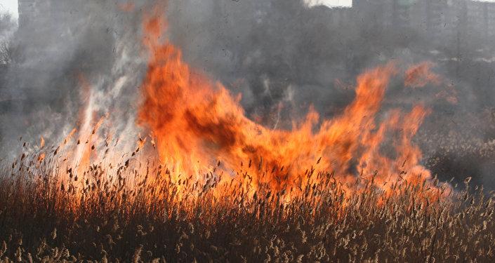 Причиной ландшафтного пожара в Верхоянском улусе стали сельхозпалы