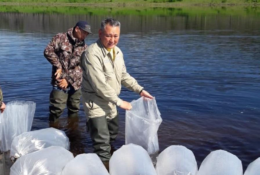 В Светлинское водохранилище выпустили 3,5 млн личинки пеляди