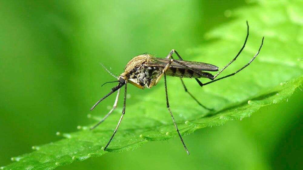 В Таиланде объявлена эпидемия лихорадки денге