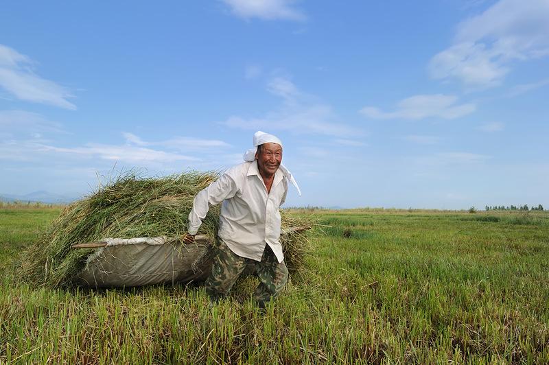 В Якутии заготовят 479 тысяч тонн сена
