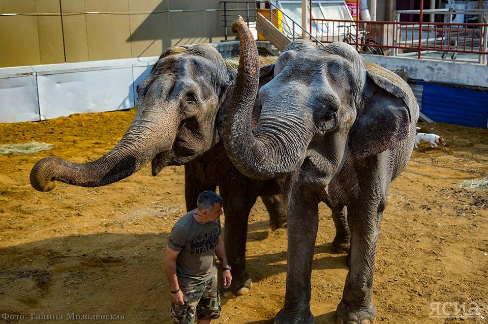 Впервые: Итальянский цирк привез в Якутск слонов (ФОТО)