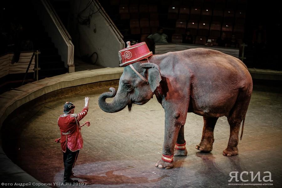 Грациозные слоны и молодые тигры итальянского цирка на репетиции в Якутске (ФОТО)