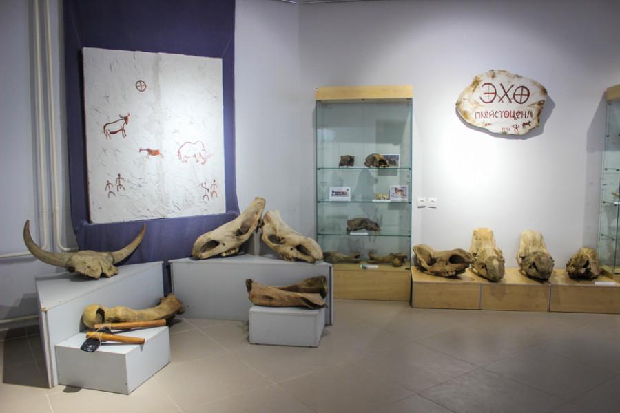 Эхо Плейстоцена: В музее Ярославского можно увидеть кости животных мамонтовой фауны