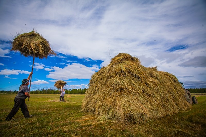 В Якутии заготовлено 59 тысяч тонн сена