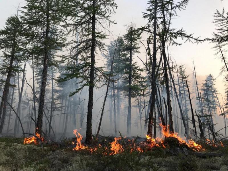 Лесной пожар на подступах к Удачному ликвидирован