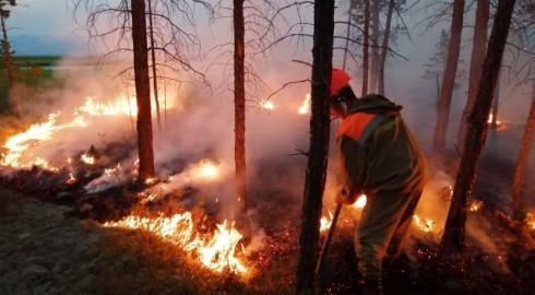 лесные пожары 2019