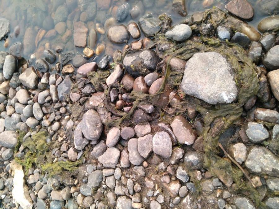 Проверка на Вилюе: «Сгустки» на реке могут быть природным явлением