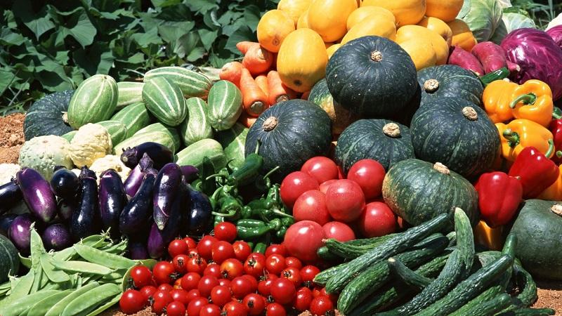 Мэрия Якутска объявила конкурсы для цветоводов и овощеводов