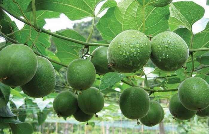 Ученые назвали фрукт, который сохраняет молодость