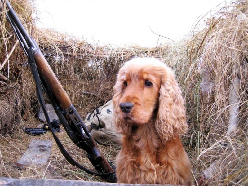 В Якутске проведут День подружейной собаки
