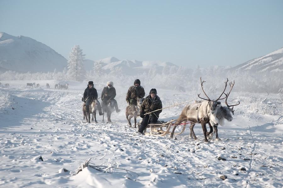Оленеводов в Якутии могут оштрафовать за сбор бивней мамонта в природном заказнике