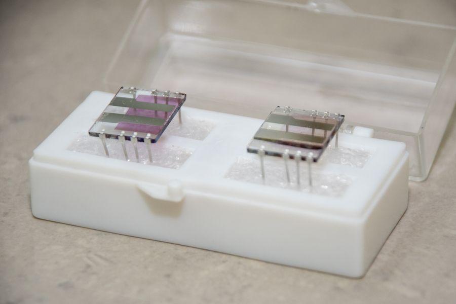 Сибирские учёные создают органические солнечные батарейки
