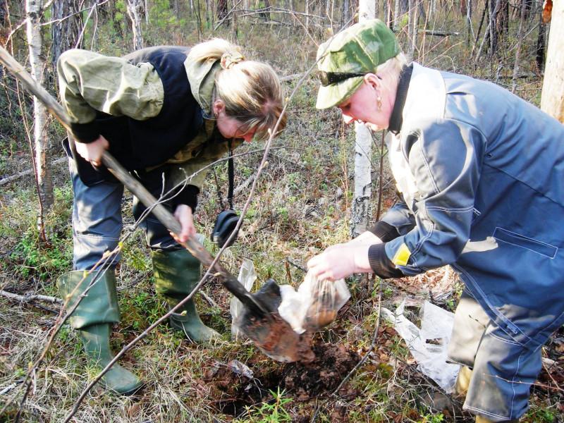 Якутские микробиологи создали эффективный биопрепарат, очищающий почву от нефтяных загрязнений