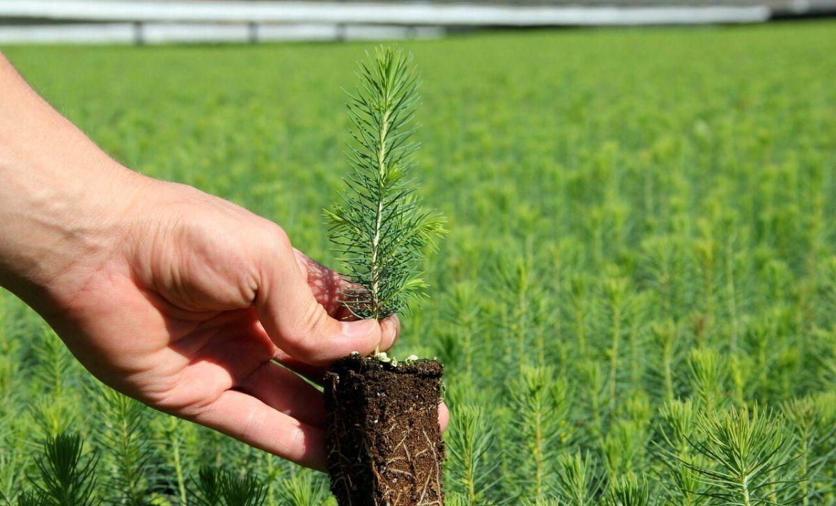 В 2020 году в Якутии откроют промышленный лесной питомник
