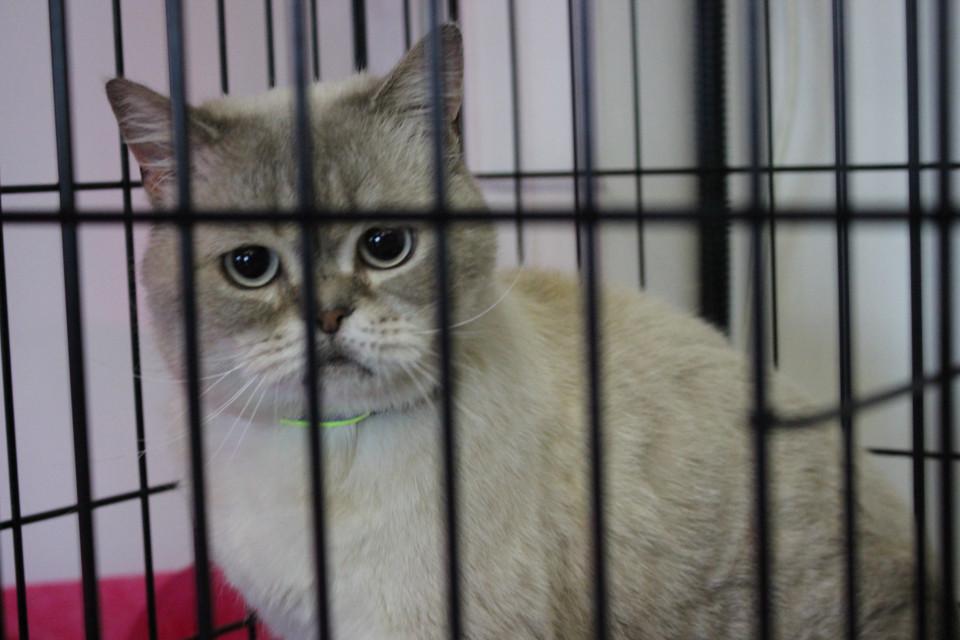 «Счастье в каждый дом». В Якутске проходит акция по устройству домашних животных