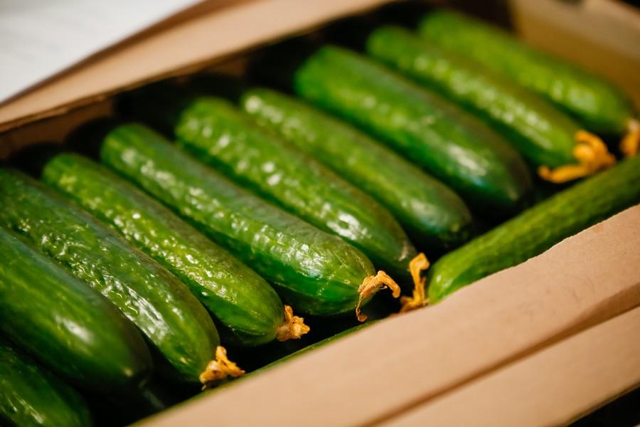 Теплица «Саюри» планирует увеличить производство овощей до 2 тысяч тонн