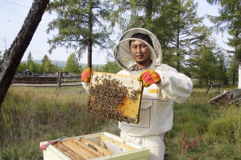 В северном районе Якутии начали разводить пчел