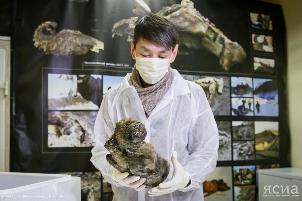 Dog or..? О прошлом и будущем древнего щенка, найденного в Якутии