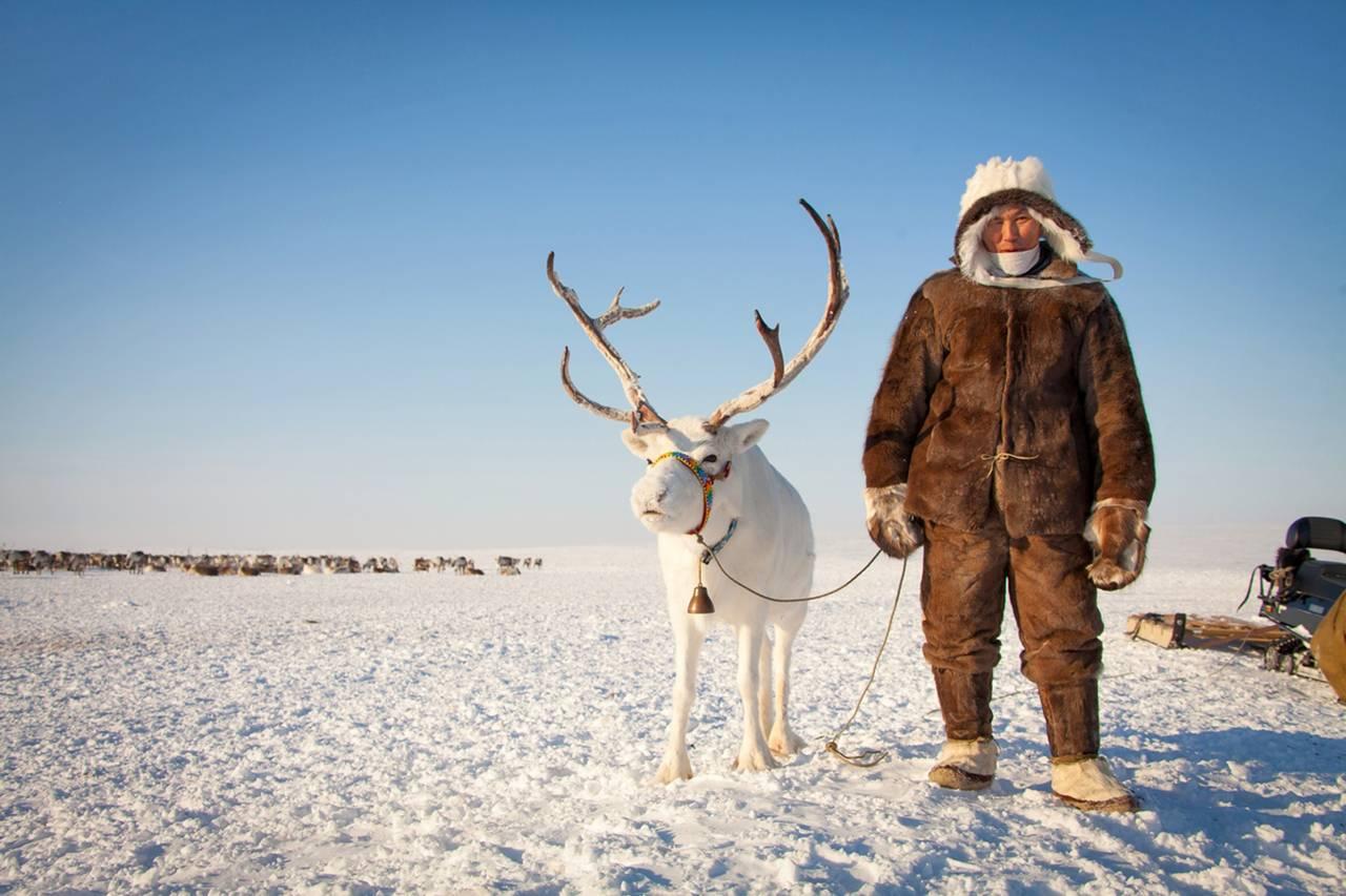 """По миллиону рублей до 35 лет. Якутия запустит программу """"Молодой оленевод"""" в 2020 году"""