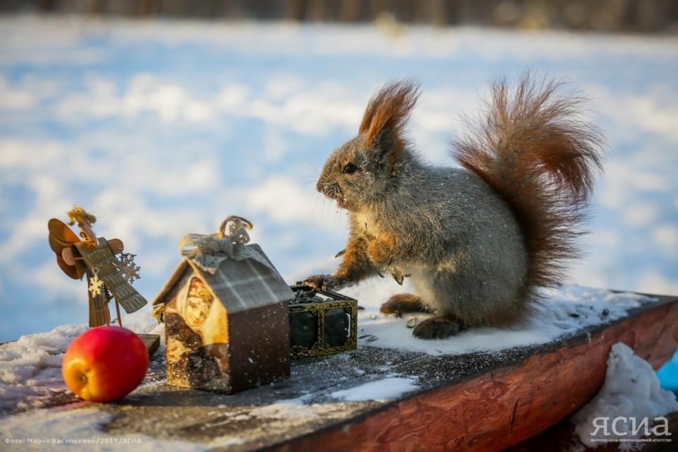 Небольшой снег и -3 градуса. Прогноз погоды в Якутске на понедельник