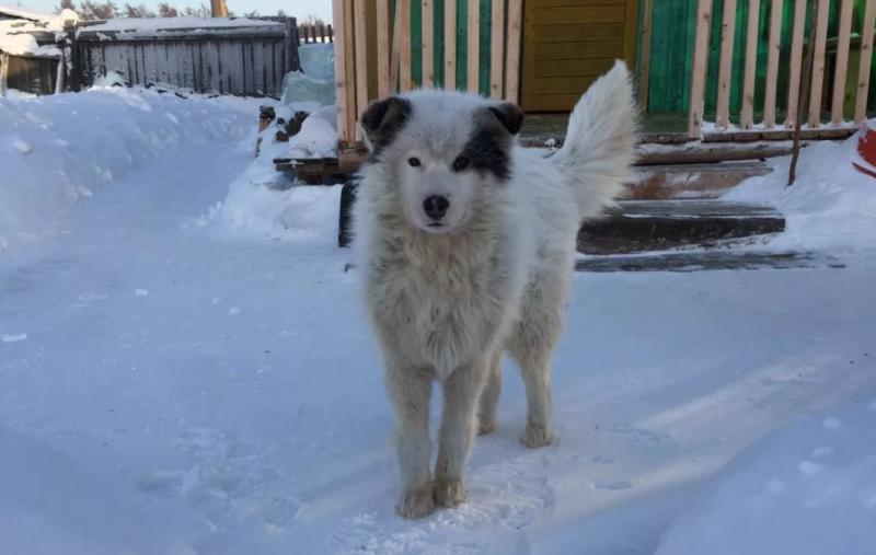 """На территории Якутска запретили """"самовыгул"""" домашних животных"""