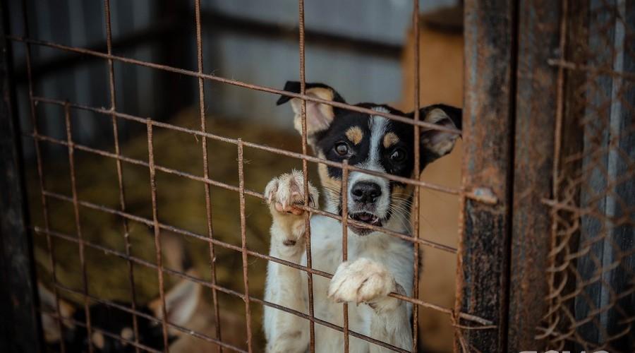 Чипирование домашних животных, заседание правительства