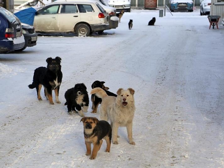 В Якутске объявят двухмесячник по отлову бродячих собак