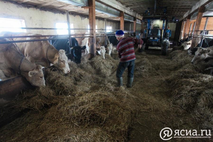 Развитие сельского хозяйства в Олекминском районе названо приоритетным направлением