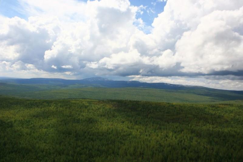 Рослесхозу передали полномочия по охране ценных и защитных лесов