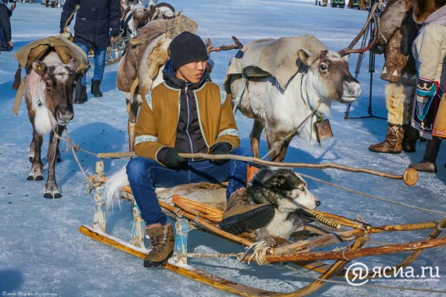 Молодым оленеводам по миллиону. Как пилотный проект будет работать в Якутии