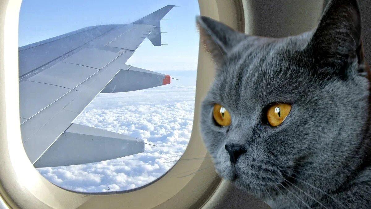 В России предлагают ввести авиабилеты для животных