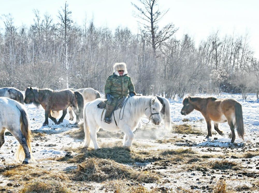 Айсен Николаев: Благодаря коневодам-табунщикам поголовье лошадей выросло до 180 тысяч