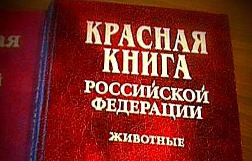 Охотничьи виды животных не включены в Красную книгу России