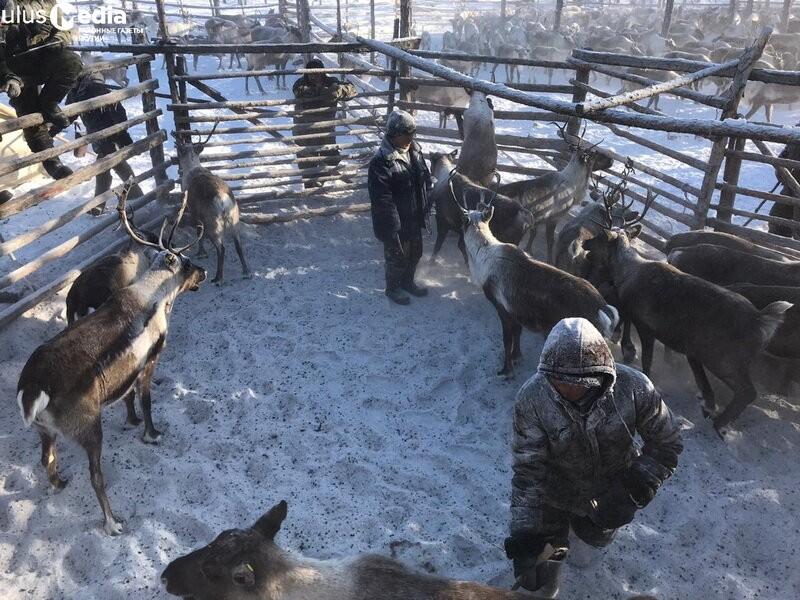 В Булунском районе подвели итоги весенней корализации
