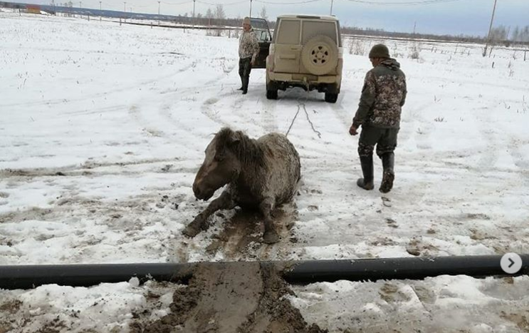 ФОТОФАКТ. Жеребца, угодившего в канаву, вытащили неравнодушные жители