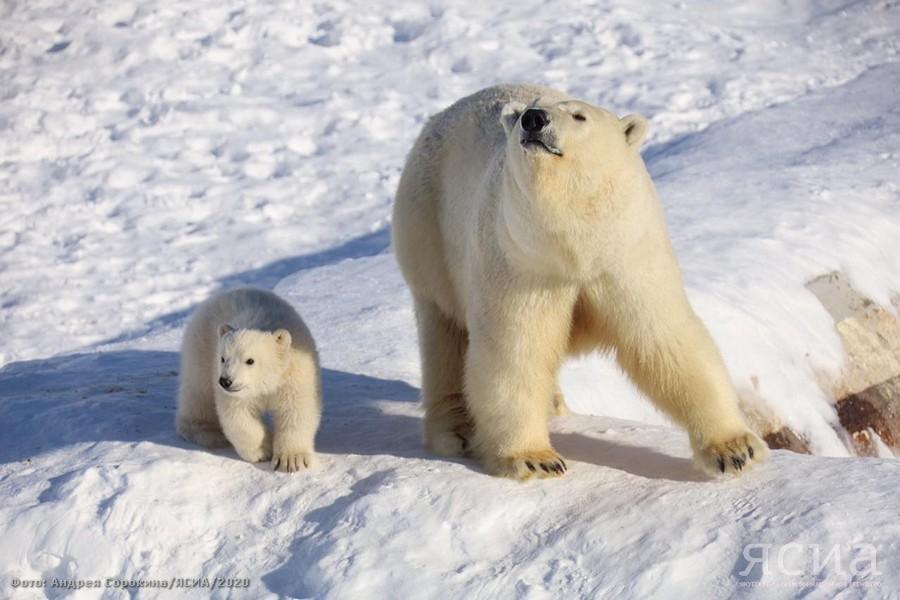 """Добро пожаловать в мир! Первая прогулка белого медвежонка в зоопарке """"Орто Дойду"""""""