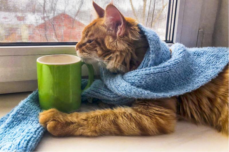 Кошек назвали самыми восприимчивыми к коронавирусу животными