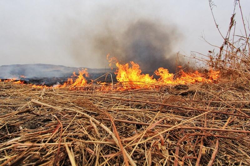 В Якутии потушили два лесных пожара на общей площади 10 га