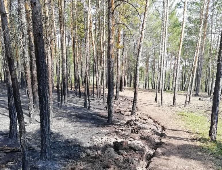 Один лесной пожар тушат в Усть-Майском районе Якутии