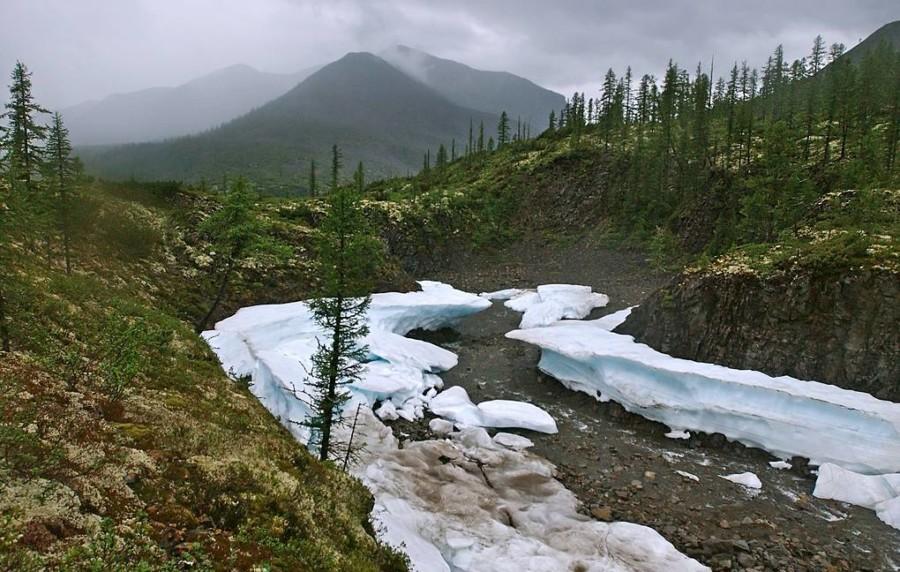На Дальнем Востоке проведут работы по восстановлению лесов на 244 тыс. га
