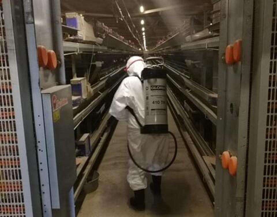 Дезинфекция на птицефабриках Якутии идет полным ходом