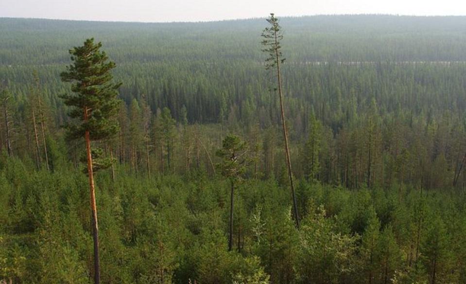 Алексей Колодезников: Дополнительные федеральные средства помогут повысить оперативность борьбы с лесными пожарами