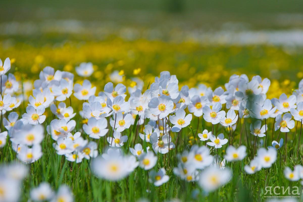 Обильные росы — к хорошему урожаю: Народные приметы июня