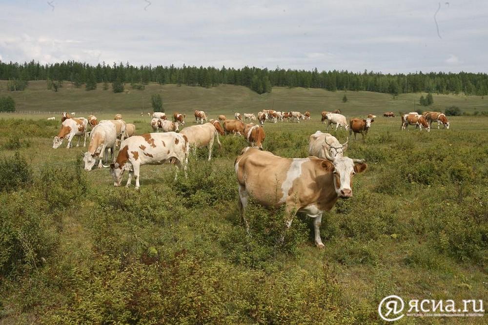 В Якутии 130 скотоводческих хозяйств получили финансовую помощь