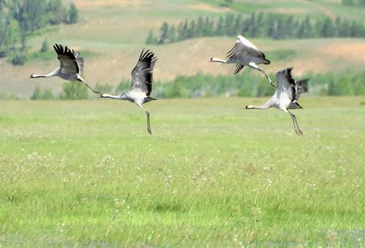 ФОТОФАКТ: Прокопий Ноговицын поймал кадры летящих журавлей