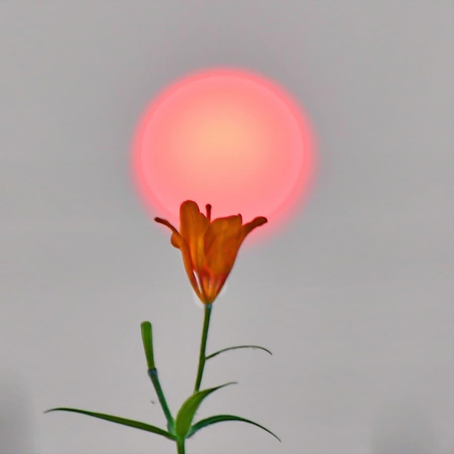ФОТО: Цветок Солнца сардаана глазами Галины Давыдовой