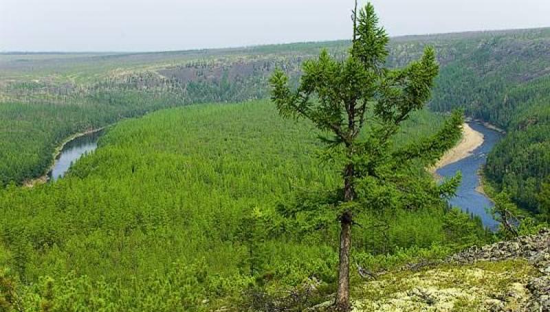 В Якутии на труднодоступных землях лесного фонда действуют 13 термоточек