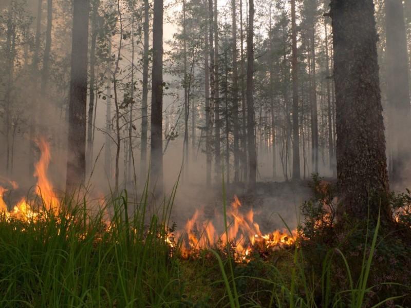Лесной пожар по вине человека произошел в Олекминском районе