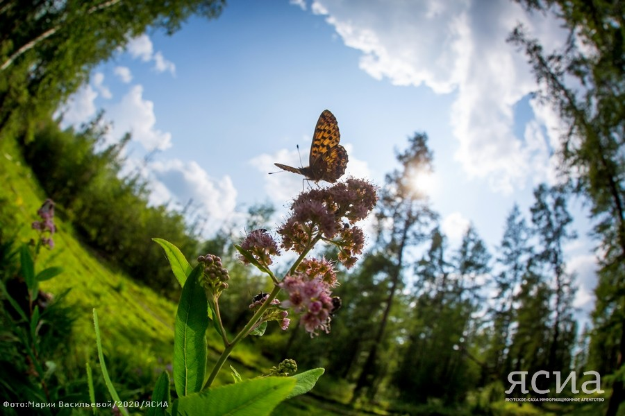 2 июля - Зосима Пчельник: Приметы, что можно и нельзя делать