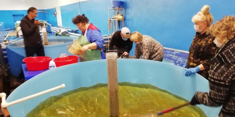 Компания «Колмар» выпустила 118 тысяч мальков пеляди в Вилюйское водохранилище